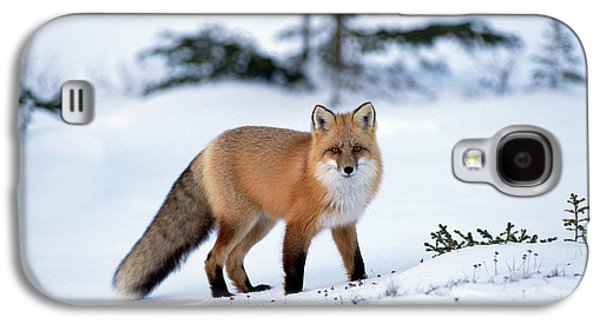 Animals and Earth - Galaxy S4 Cases - Red Fox Vulpes Vulpes Portrait Galaxy S4 Case by Konrad Wothe