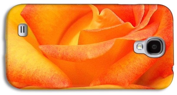 Floribunda Galaxy S4 Cases - Red Gold Rose Galaxy S4 Case by Will Borden