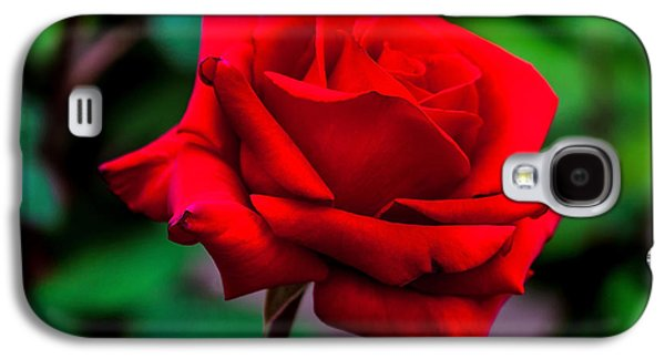 Rose Petals Galaxy S4 Cases - Red Rose 2 Galaxy S4 Case by Az Jackson