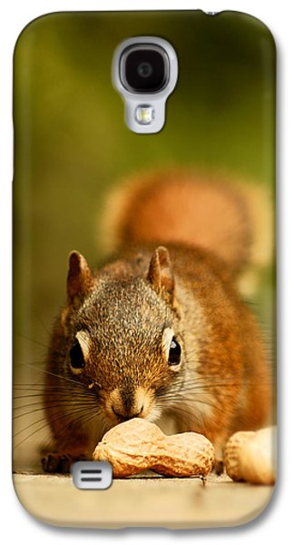 Red Squirrel   Galaxy S4 Case by Cale Best