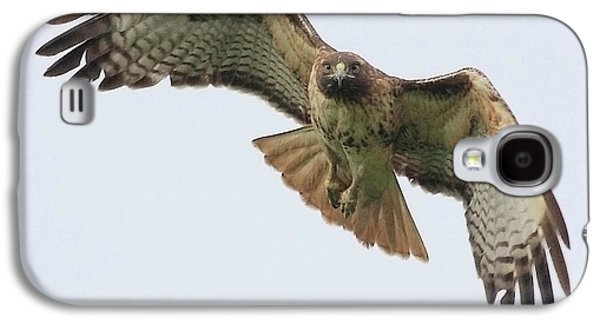 Wing Tong Galaxy S4 Cases - Red Tailed Hawk Finds Its Prey Galaxy S4 Case by Wingsdomain Art and Photography