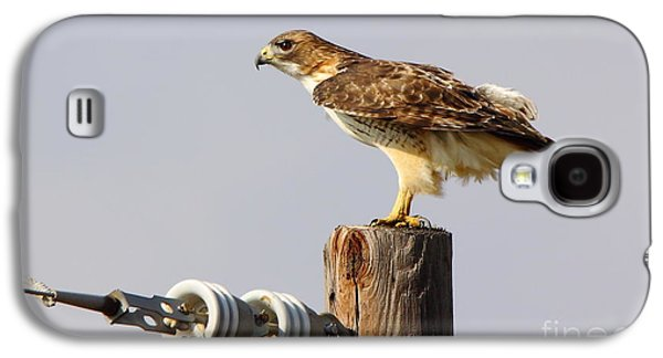 Telephone Poles Galaxy S4 Cases - Red Tailed Hawk Perched Galaxy S4 Case by Robert Frederick