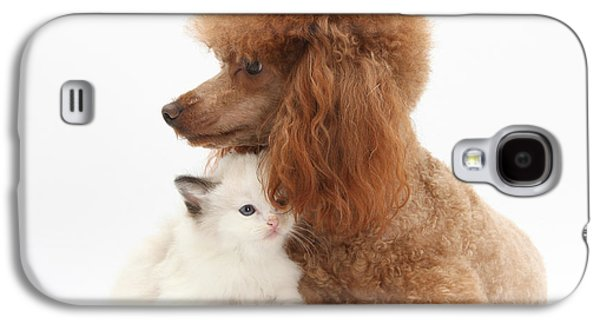 Domesticated Animals Galaxy S4 Cases - Red Toy Poodle And Kitten Galaxy S4 Case by Mark Taylor