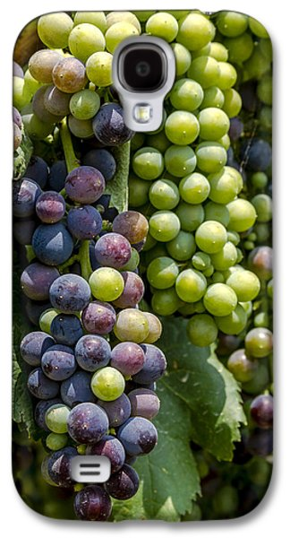 Red Wine Grapes In The Vineyard Galaxy S4 Case by Teri Virbickis