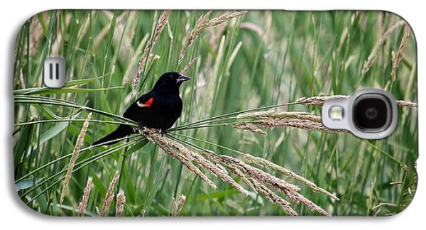 Red Photographs Galaxy S4 Cases - Red-winged Blackbird Galaxy S4 Case by LeAnne Perry
