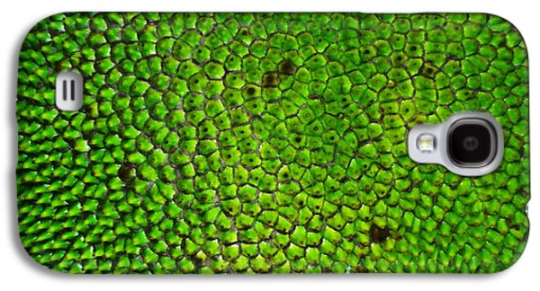 Plankton Paintings Galaxy S4 Cases - Reptile Galaxy S4 Case by Dietmar Scherf