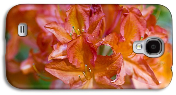 Rhododendron Galaxy S4 Cases - Rhododendron flowers Galaxy S4 Case by Frank Tschakert