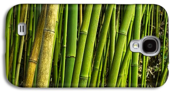 Recently Sold -  - Nature Abstract Galaxy S4 Cases - Road To Hana Bamboo Panorama - Maui Hawaii Galaxy S4 Case by Brian Harig