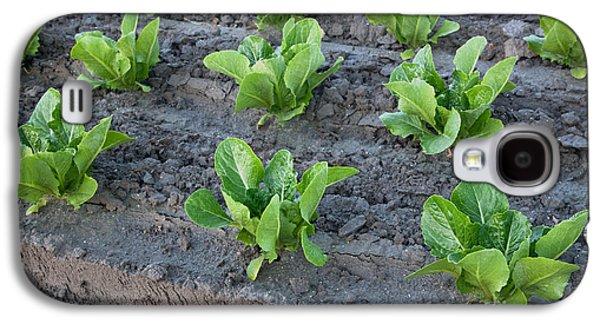 Romaine Galaxy S4 Cases - Romaine Lettuce Galaxy S4 Case by Inga Spence