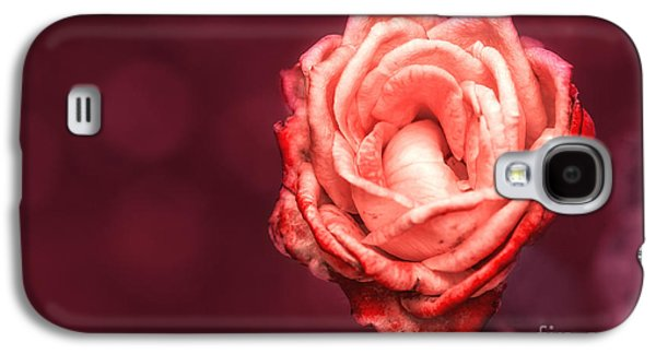 Botanical Galaxy S4 Cases - Romantic Galaxy S4 Case by Charuhas Images