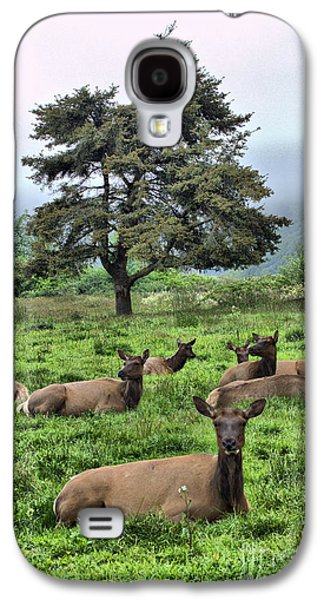 Autumn Landscape Ceramics Galaxy S4 Cases - Roosevelt Elk Lounging Galaxy S4 Case by Nena Trapp
