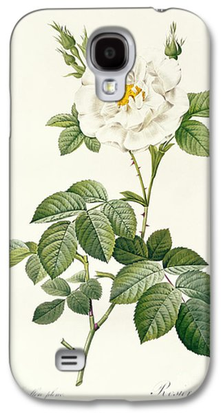Nature Study Drawings Galaxy S4 Cases - Rosa Alba flore pleno Galaxy S4 Case by Pierre Joseph Redoute