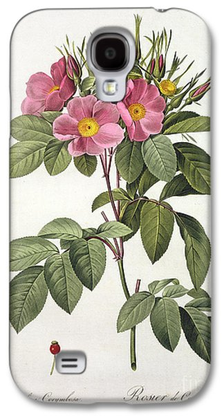 Botanical Galaxy S4 Cases - Rosa Carolina Corymbosa Galaxy S4 Case by Pierre Joseph Redoute