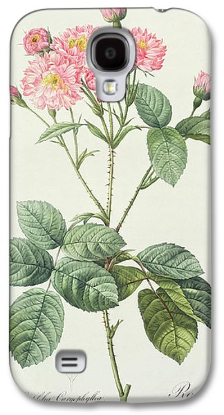 Nature Study Drawings Galaxy S4 Cases - Rosa Centifolia Caryophyllea Galaxy S4 Case by Pierre Joseph Redoute
