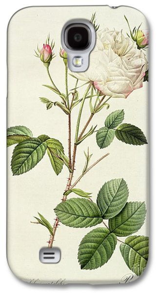19th Galaxy S4 Cases - Rosa Centifolia Mutabilis Galaxy S4 Case by Pierre Joseph Redoute