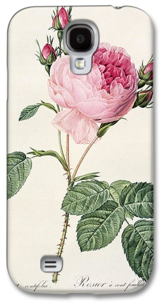 Nature Study Drawings Galaxy S4 Cases - Rosa Centifolia Galaxy S4 Case by Pierre Joseph Redoute