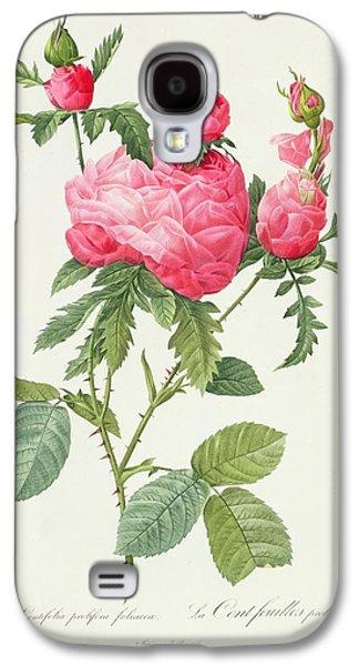 Nature Study Drawings Galaxy S4 Cases - Rosa Centifolia Prolifera Foliacea Galaxy S4 Case by Pierre Joseph Redoute