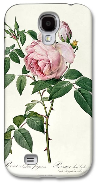 Nature Study Drawings Galaxy S4 Cases - Rosa chinensis and Rosa gigantea Galaxy S4 Case by Joseph Pierre Redoute
