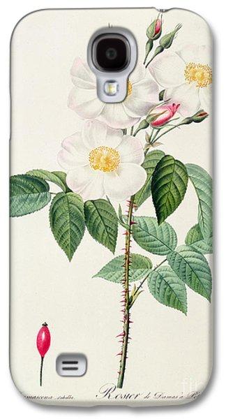Nature Study Drawings Galaxy S4 Cases - Rosa Damascena Subalba Galaxy S4 Case by Pierre Joseph Redoute