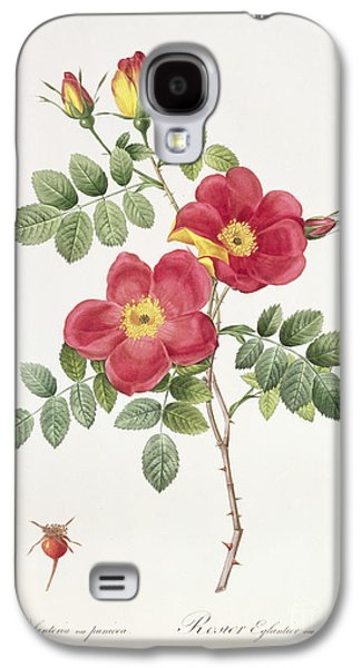 19th Galaxy S4 Cases - Rosa Eglantera Punicea Galaxy S4 Case by Pierre Joseph Redoute