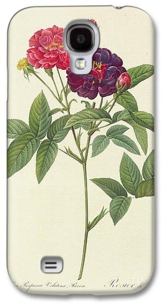 Nature Study Drawings Galaxy S4 Cases - Rosa Gallica Purpurea Velutina Galaxy S4 Case by Pierre Joseph Redoute