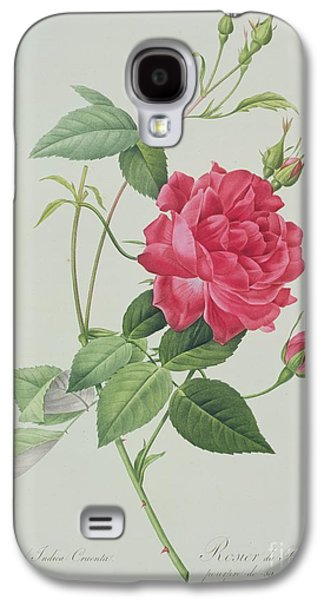 Nature Study Drawings Galaxy S4 Cases - Rosa indica cruenta Galaxy S4 Case by Pierre Joseph Redoute