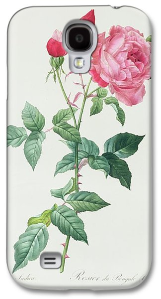 Nature Study Drawings Galaxy S4 Cases - Rosa Indica Galaxy S4 Case by Pierre Joseph Redoute