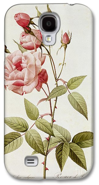 19th Galaxy S4 Cases - Rosa Indica Vulgaris Galaxy S4 Case by Pierre Joseph Redoute