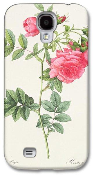 Nature Study Drawings Galaxy S4 Cases - Rosa Pimpinellifolia Flore Variegato  Galaxy S4 Case by Pierre Joseph Redoute