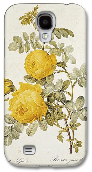 19th Galaxy S4 Cases - Rosa Sulfurea Galaxy S4 Case by Pierre Redoute
