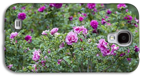 Garden Scene Galaxy S4 Cases - Rose Garden Galaxy S4 Case by Frank Tschakert