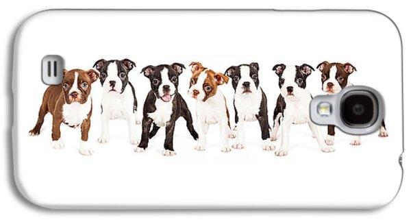 Studio Photographs Galaxy S4 Cases - Row of Boston Terrier Puppies Galaxy S4 Case by Susan  Schmitz