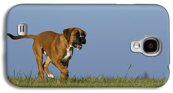 Boxer Galaxy S4 Cases - Running Boxer Puppy Galaxy S4 Case by Jean-Louis Klein & Marie-Luce Hubert