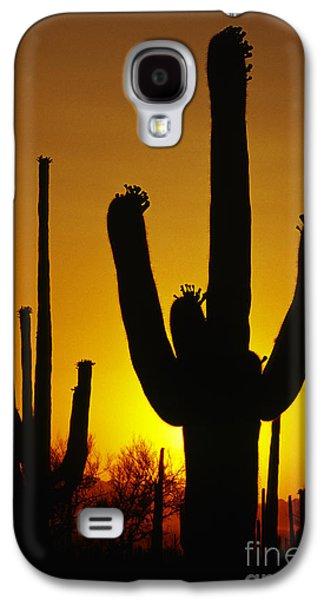 Saguaro Sunset Galaxy S4 Case by Sandra Bronstein