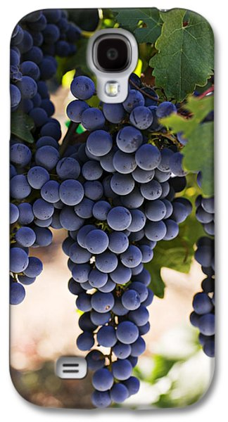 Vines Galaxy S4 Cases - Sauvignon grapes Galaxy S4 Case by Garry Gay