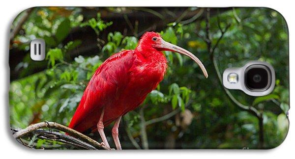 Scarlet Ibis Galaxy S4 Case by B.G. Thomson