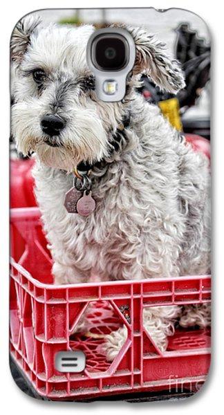 Puppy Digital Art Galaxy S4 Cases - Schnauzer Puppy Mania - I Got a Ticket To Ride Galaxy S4 Case by Ella Kaye Dickey