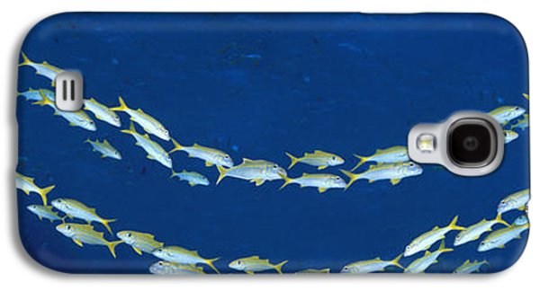 Schools Of Fish Galaxy S4 Cases - School Of Fish Great Barrier Reef Galaxy S4 Case by Panoramic Images