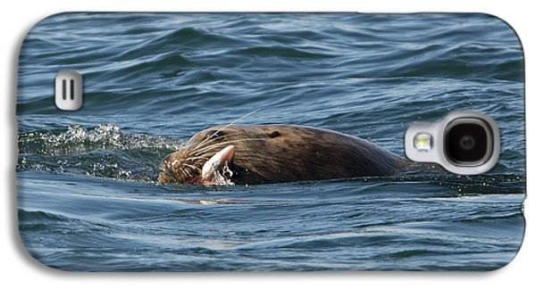 Sea Lion Meal Galaxy S4 Case by Mike Dawson