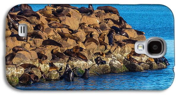 Sea Lions Sunning On Rocks Galaxy S4 Case by Garry Gay