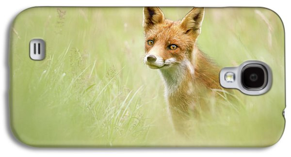 Sea Of Green - Red Fox In The Grass Galaxy S4 Case by Roeselien Raimond