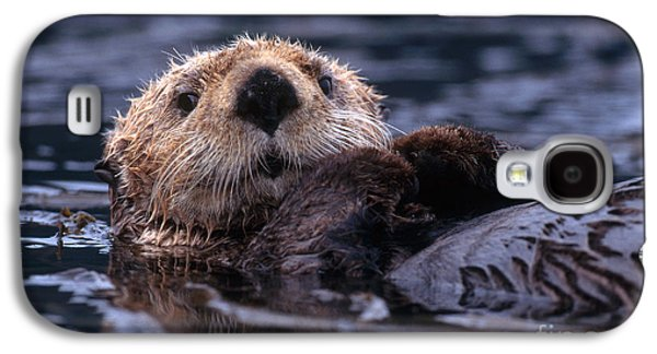 Sea Otter Galaxy S4 Case by Yva Momatiuk and John Eastcott and Photo Researchers