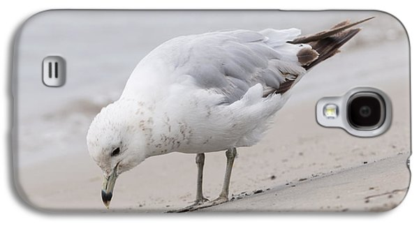 Seabirds Galaxy S4 Cases - Seagull on foggy beach Galaxy S4 Case by Elena Elisseeva