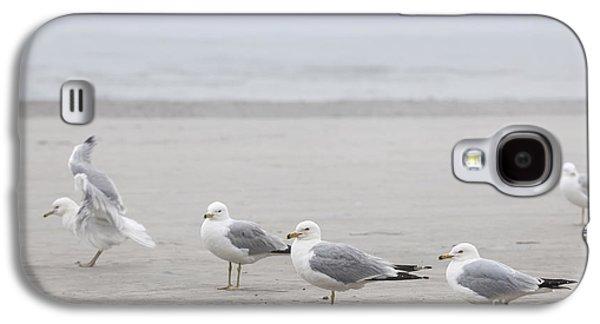 Seabirds Galaxy S4 Cases - Seagulls on foggy beach Galaxy S4 Case by Elena Elisseeva