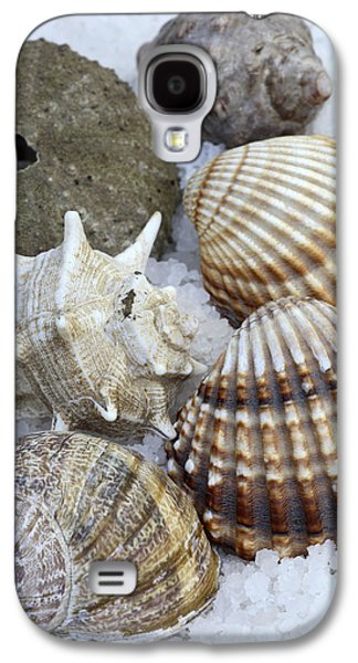 Element Photographs Galaxy S4 Cases - Seashells Galaxy S4 Case by Frank Tschakert