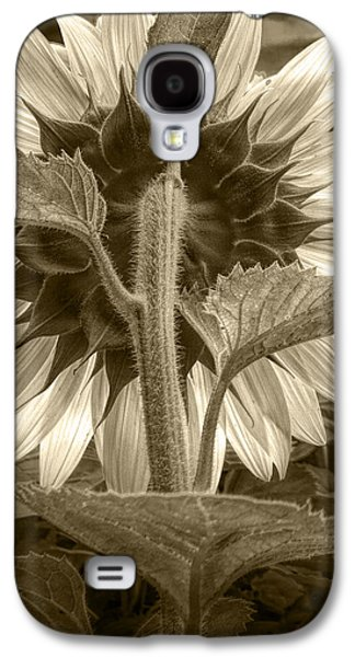 Selenium Galaxy S4 Cases - Sepia Tone of the Back of a Sunflower Galaxy S4 Case by Randall Nyhof