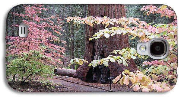Pine Trees Galaxy S4 Cases - Sequoia  Trees 3 Galaxy S4 Case by Naxart Studio