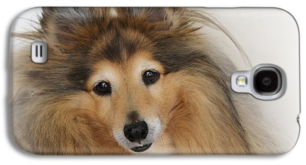 Sheltie Dog - A Sweet-natured Smart Pet Galaxy S4 Case by Christine Till