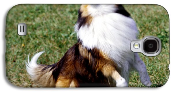 Shetland Sheepdog And Ball Galaxy S4 Case by Jeanne White