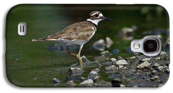Killdeer  Galaxy S4 Case by Douglas Stucky